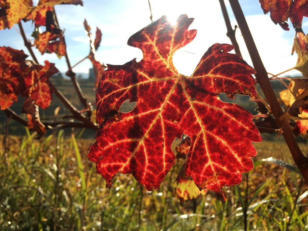 La magia dell'autunno