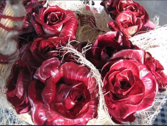 Rosa di Gorizia